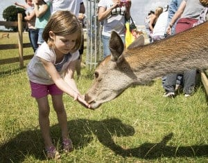 children hand feeding red deer