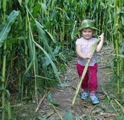 Maize Maze at Farmer Palmers Farm Park Dorset Family Fun