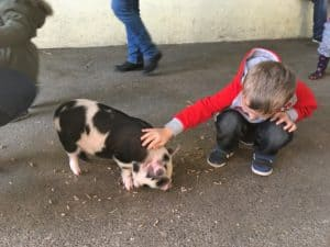 A boy stroking a piglet at Farmer Palmer's