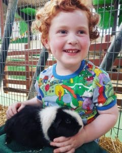 Boy in bright coloured tshirt holding a guinea pig on his lap at Farmer Palmer's