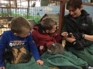 Children meeting guinea pigs with Animal Barn team at Farmer Palmer's